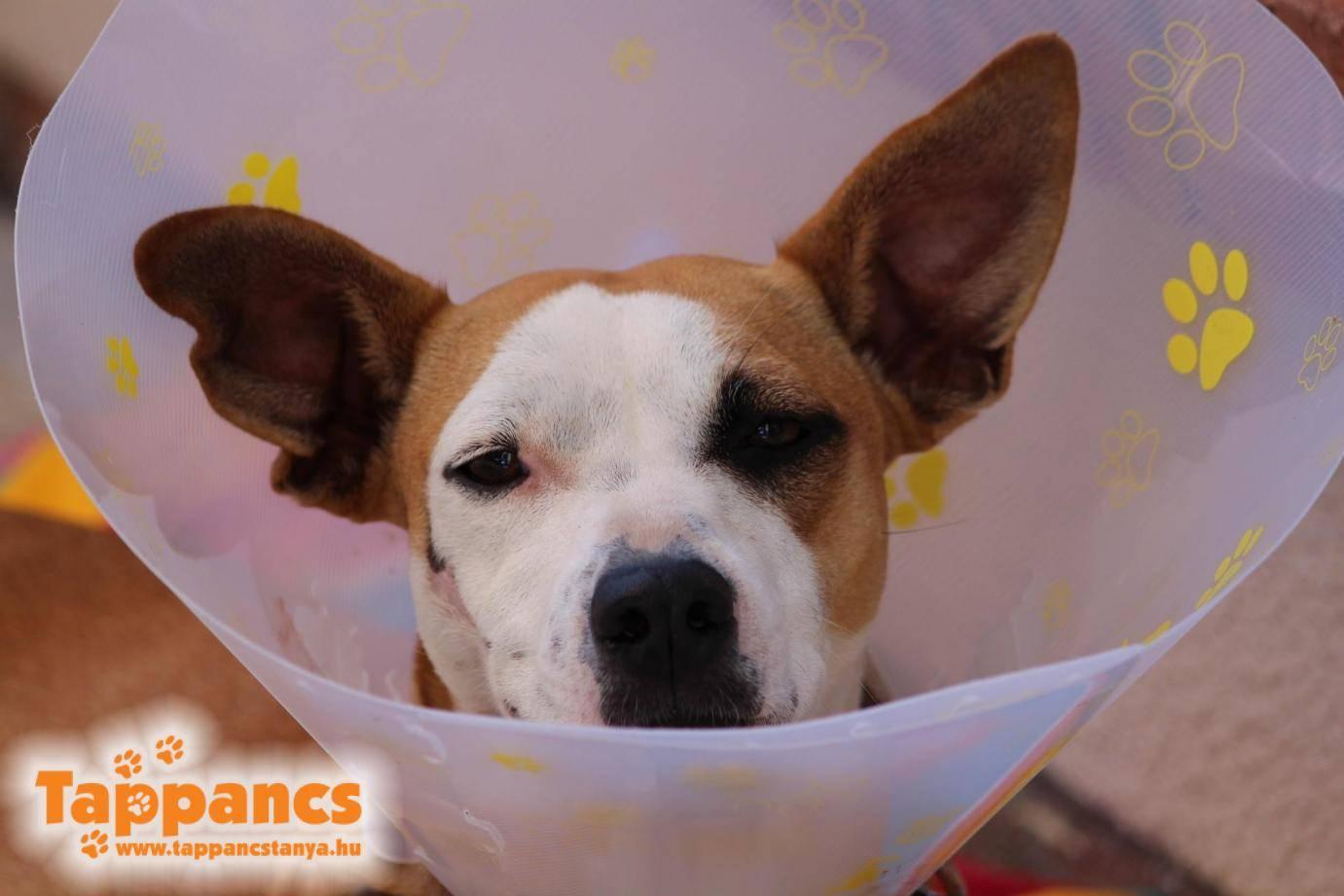 Állatorvosra van szükség - Tappancs Tanya 34a34a36e8